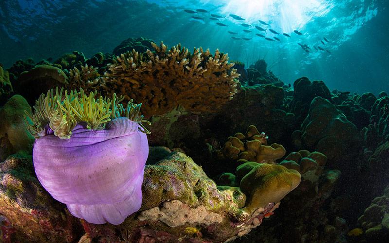 Underwater Nusa Penida